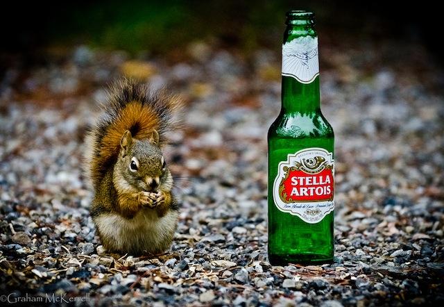 Stella the Squirrel